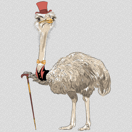 sketch closeup portrait of funny Ostrich Bird hipster in red top hat and gold bowtie with walking stick Vector