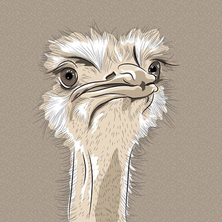 ostrich: sketch closeup portrait of funny  Ostrich Bird  Illustration