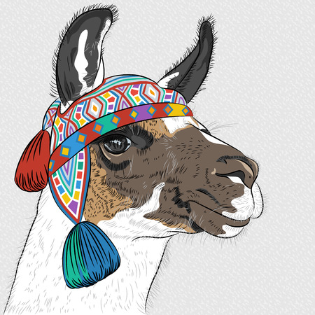 llama: vector sketch of Alpaca smiling