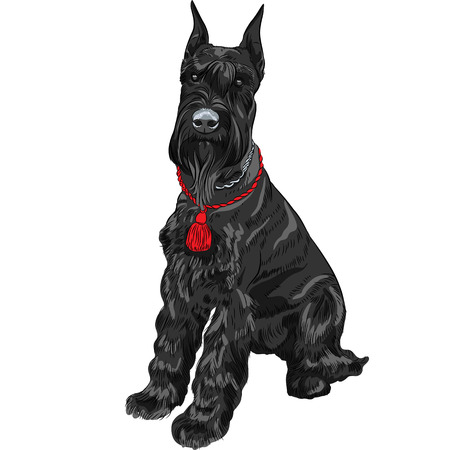 breed: dog breed Giant Schnauzer color black isolated in the white background Illustration