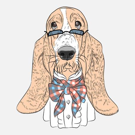 basset hound: hipster perro Basset Hound raza en vidrios y una pajarita