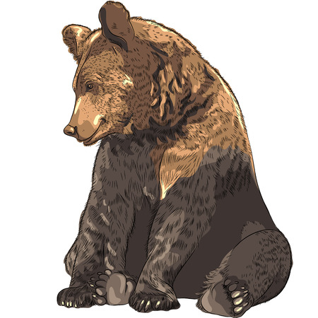 the brown: funny cartoon bear sitting and smiling Illustration