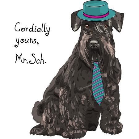 青い帽子、ネクタイのヒップスター犬シュナウザーの品種