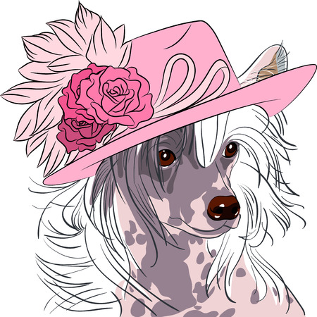 hipster dog Chinese Crested breed in a pink hat with roses Vector
