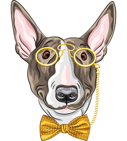 mod: hipster dog Bullterrier  breed in a gold pince-nez and bow tie