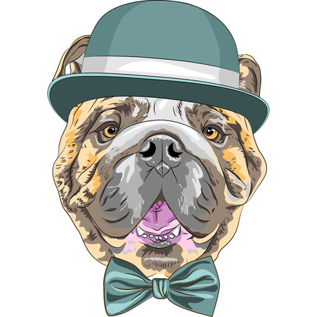 english: hipster dog English Bulldog breed in a blue hat and bow tie