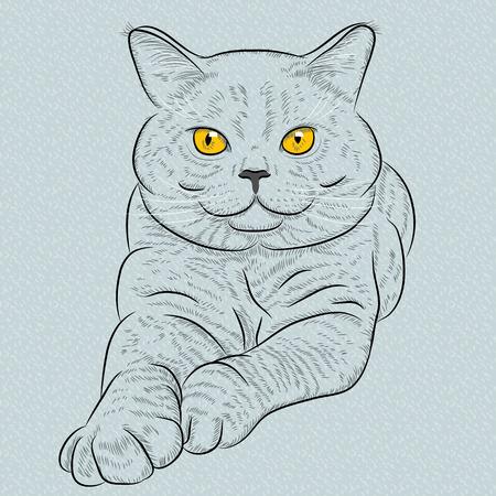 Britse korthaar blauwe kat met gele ogen leugens en looks