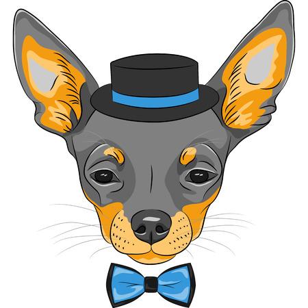 hombre con sombrero: Vector boceto a color del inconformista de dibujos animados lindo perro raza Chihuahua en el sombrero y pajarita