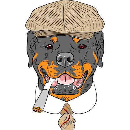 rott: inconformista perro raza rottweiler con una gorra marr�n, con un empate y un cigarrillo