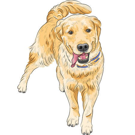 happy Labrador Retriever run to meet the owner, smiling and waving his tail  Illustration