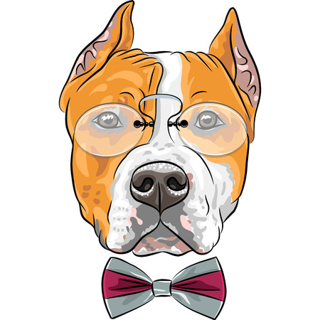 hipster dog American Staffordshire Terrier breed in a pince-nez and bow tie Vector