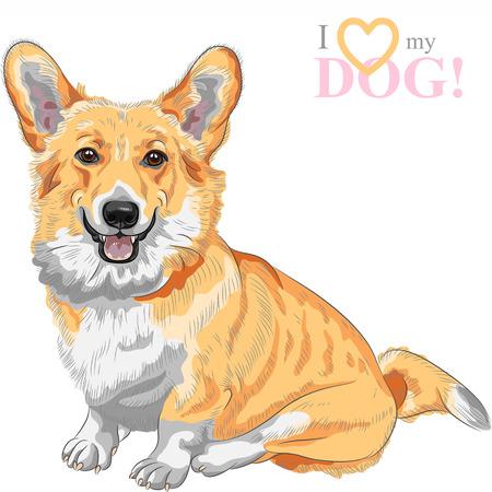 lengua larga: boceto a color de la raza de perro Corgi Gal�s del Pembroke sentado y sonriente