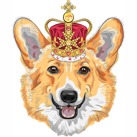 pembroke: color sketch of the dog Pembroke Welsh corgi breed in gold crown Illustration