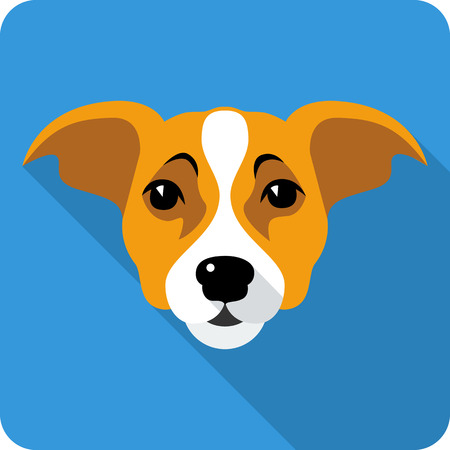 jack russell: dog Jack Russell Terrier icon flat design