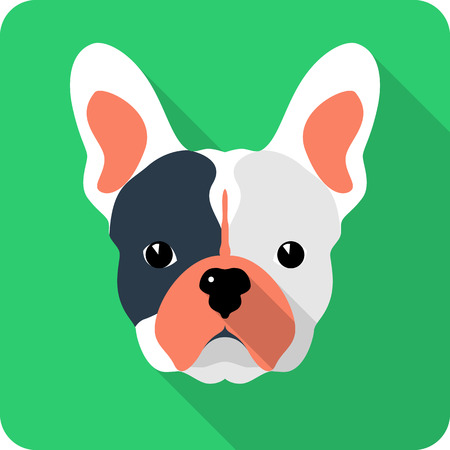 dog French bulldog icon flat design  Vector