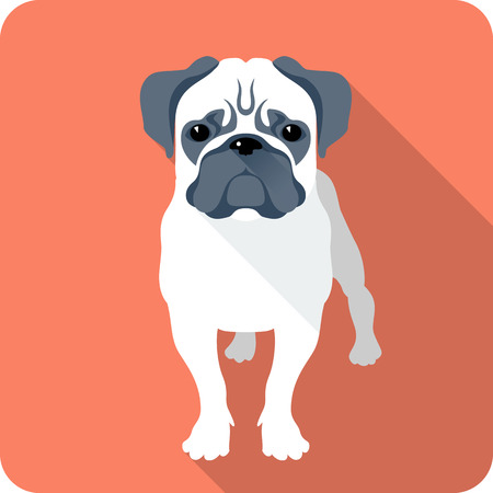 pug: dog Pug icon flat design