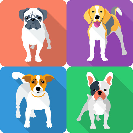 set dog icon flat design - Jack Russell Terrier, French Bulldog, Pug and Beagle breed Vector