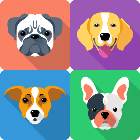 beagle terrier: set dog icon flat design - Jack Russell Terrier, French Bulldog, Pug and Beagle breed