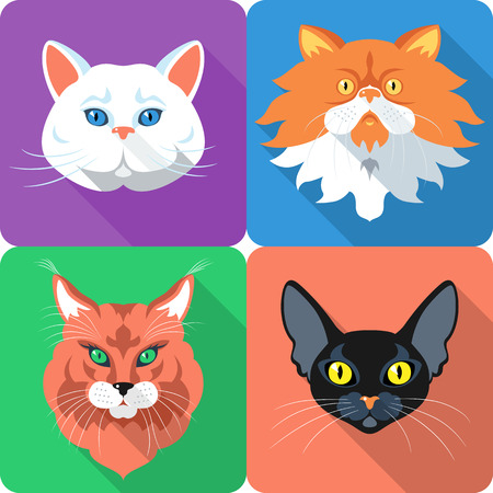 bombay: Set icon flat design british and persian cat, bombay cat and maine coon