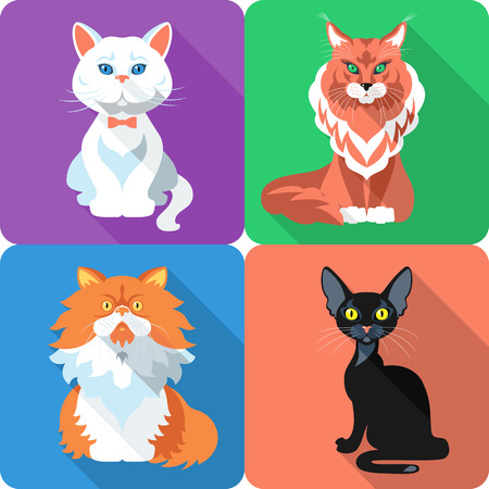 Set icon flat design british and persian cat, bombay cat and maine coon