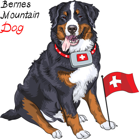 Happy Bernese mountain dog with a first aid kit and Swiss flag