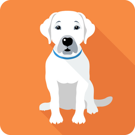 labrador puppy: dog Labrador Retriever sitting icon flat design Illustration