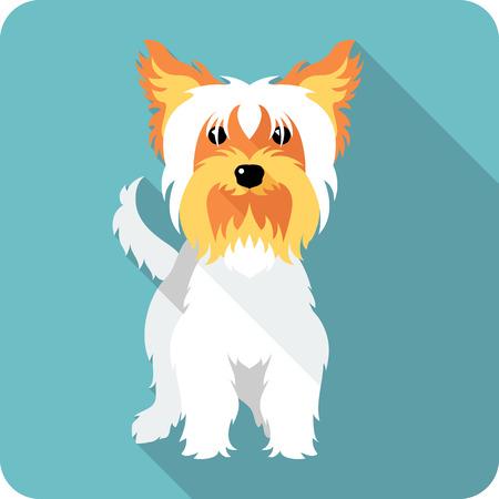 yorkshire terrier: dog Yorkshire terrier standing  icon flat design