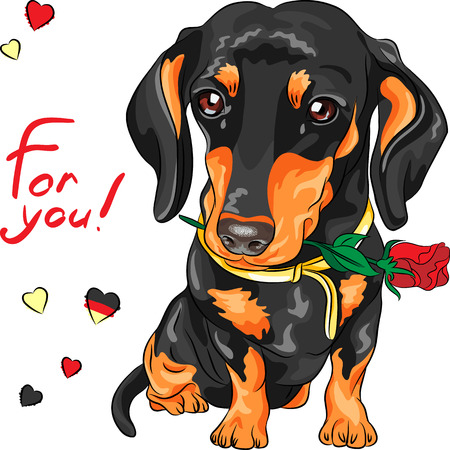 pawl: cute dog breed dachshund with red flower