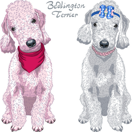 Two dogs Bedlington Terrier breed liver-colored and gray sitting