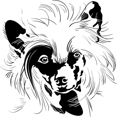 pawl: Sweet dog Chinese Crested breed hand drawing vector