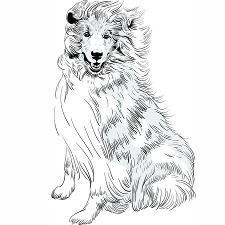 pawl: Sweet dog rough Collie breed hand drawing vector Illustration
