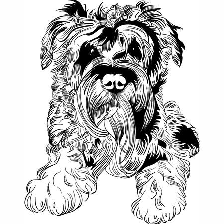 miniature breed: Dulce perro de raza Schnauzer Miniatura mano de dibujo vectorial