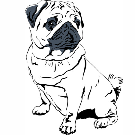 pawl: Sweet dog pug breed hand drawing vector