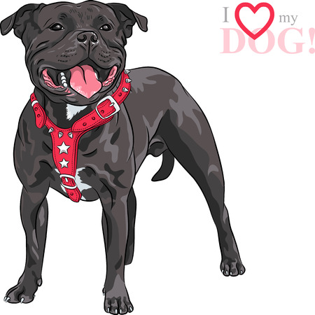 Staffordshire Bull Terrier breed dog