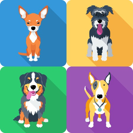 bull dog: dog icon flat design
