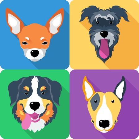 bernese: dog icon flat design