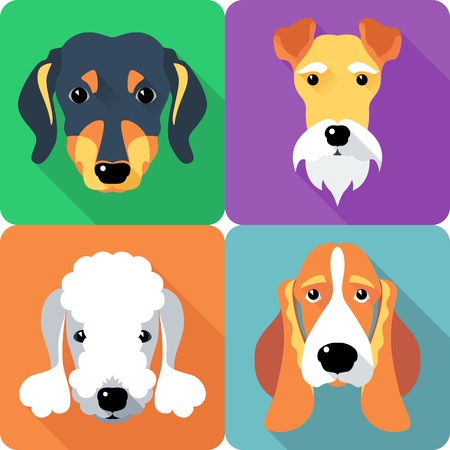 fox terrier: set dogs icon flat design