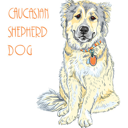 pawl: Caucasian Shepherd Dog breed Illustration