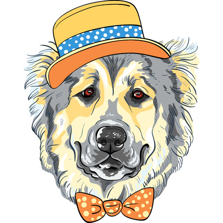 long haired: vector dog Caucasian Shepherd Dog breed in hat and bow tie Illustration