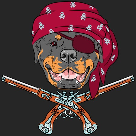 pawl: vector Dog Rottweiler Pirate with pistols Illustration