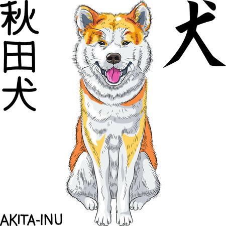 vector sketch dog Akita Inu Japanese breed smiles Illustration