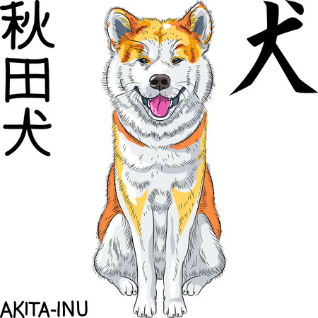 akita: vector sketch dog Akita Inu Japanese breed smiles Illustration