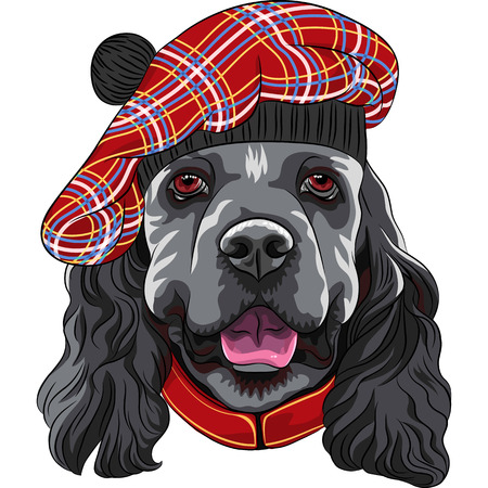 American Cocker Spaniel dog in Scottish Tam Illustration