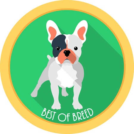 french bulldog: dog best of breed medal icon flat design