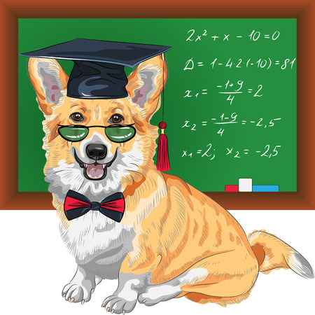 educated: vector graduated dog Pembroke Welsh corgi