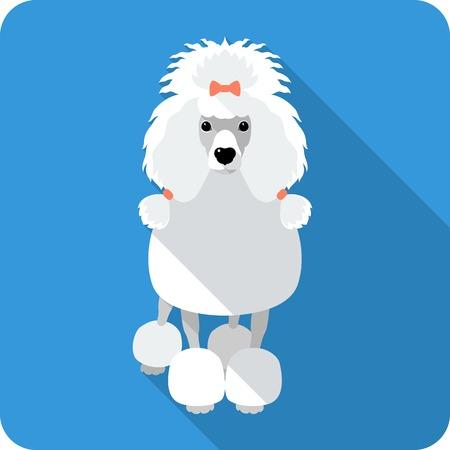 dog Poodle icon flat design