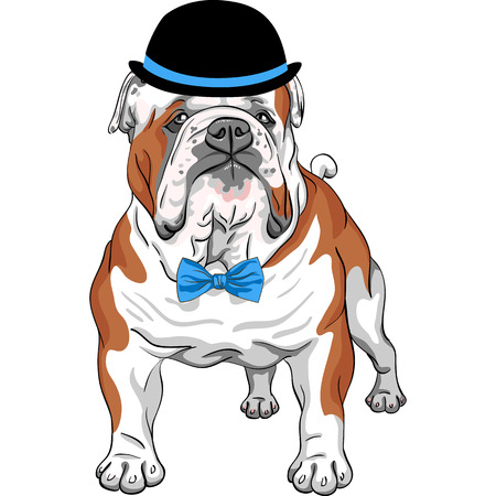 vector hipster dog English Bulldog breed