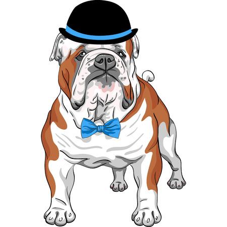 vector hipster Hund English Bulldog breed