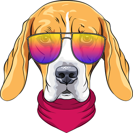 tricolour: Vector hipster serious dog Beagle breed in red cravat and trendy two-color glasses