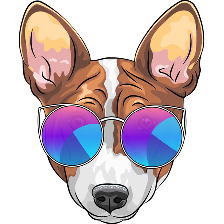 Vector hipster smiling dog Basenji  breed in trendy multicolored mirror sunglasses